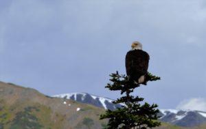 eagle wp 1